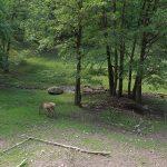 Rothirschanlage (Tierpark Suhl)