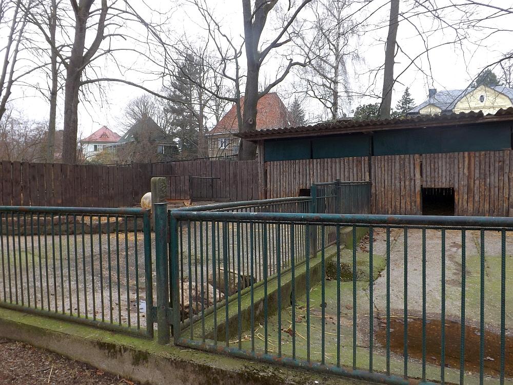 Hausschweinanlage (Tiergarten Freiberg)