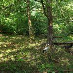 Storchenanlage (Tierpark Suhl)