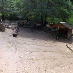 Streichelzoo (Tierpark Suhl)