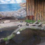 Terrarium für europäische Sumpfschildkröten (Zoopark Chomutov)