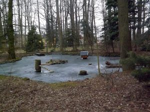 Teich (Wildgehege Annaberg-Buchholz)