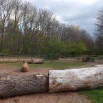 Trampeltieranlage (Thüringer Zoopark)