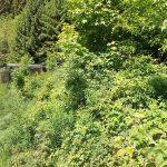 Wildkatzenanlage (Tierpark Suhl)