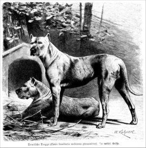 Deutsche Dogge (Brehms Tierleben)