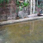 Krokodilanlage(Tierpark Hellabrunn)