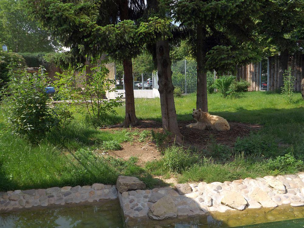 Anlage für Korsaks und Syrische Braunbären (Zoo Heidelberg)