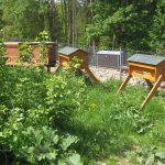 Bienen (Wildpark Haibach)