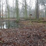Damwildanlage (Alte Fasanerie Hanau)