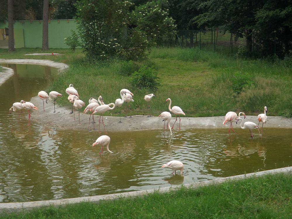 Flamingoteich (Serengetipark Hodenhagen)