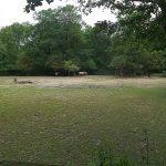 Wiese für Wildpferde und Trampeltiere (Tierpark Hellabrunn)