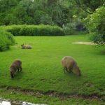 Südamerikaanlage (Tierpark Hellabrunn)
