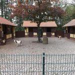 Streichelzoo (Tierpark Limbach-Oberfrohna)