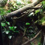 Terrarium für Baumpythons und Korallenfinger (Tierpark Hellabrunn)