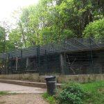 Waschbäranlage (Wildpark Hundshaupten)