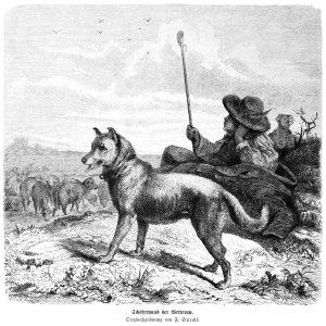Schäferhund aus der Wetterau (Friedrich Specht, Gartenlaube)