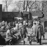 Zoo Leipzig, Bärenburg mit Eisbären 1964 (Heinz Koch, Bundesarchiv)