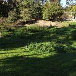 Känguruwiese (Vogelpark Abensberg)