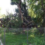 Anlage für Kleine Pandas (Zoo Dresden)