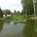 Teich (Tiergarten Delitzsch)