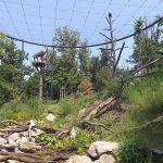 Weißkopfseeadlervoliere (Zoo Brno)