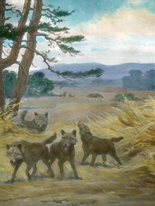 Canis dirus (Charles R. Knight)