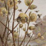 Frühlingsbild aus dem Insektenleben