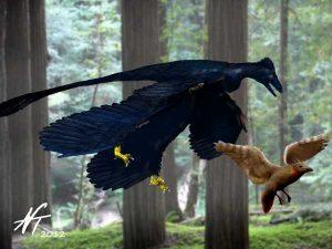 Microraptor zhaoianus (© N. Tamura)