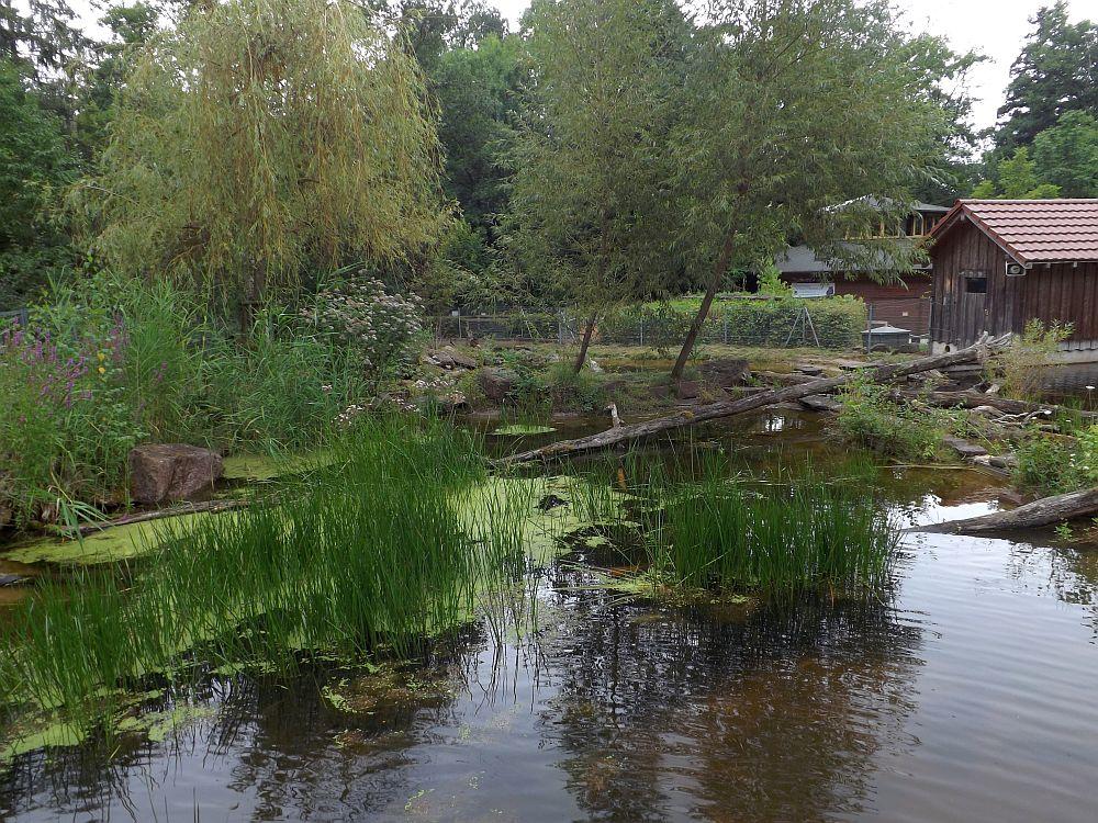 Fischotteranlage (Wildpark Pforzheim)