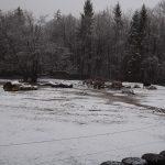 Anlage für Heckrinder und Tarpane (Tierpark Hellabrunn)