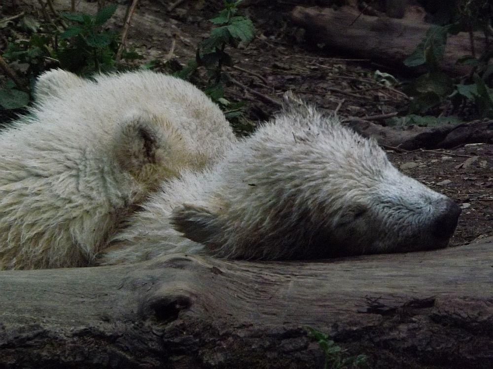Nobby und Nele, 2014 (Tierpark Hellabrunn)