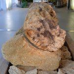 Versteinerter Stamm (Museum für Naturkunde Chemnitz)