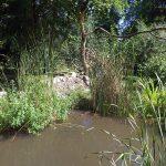 Wildkatzenanlage (Tierpark Lange Erlen)