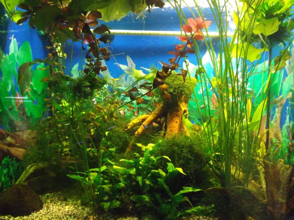 Aquarium (Tierpark Klingenthal)