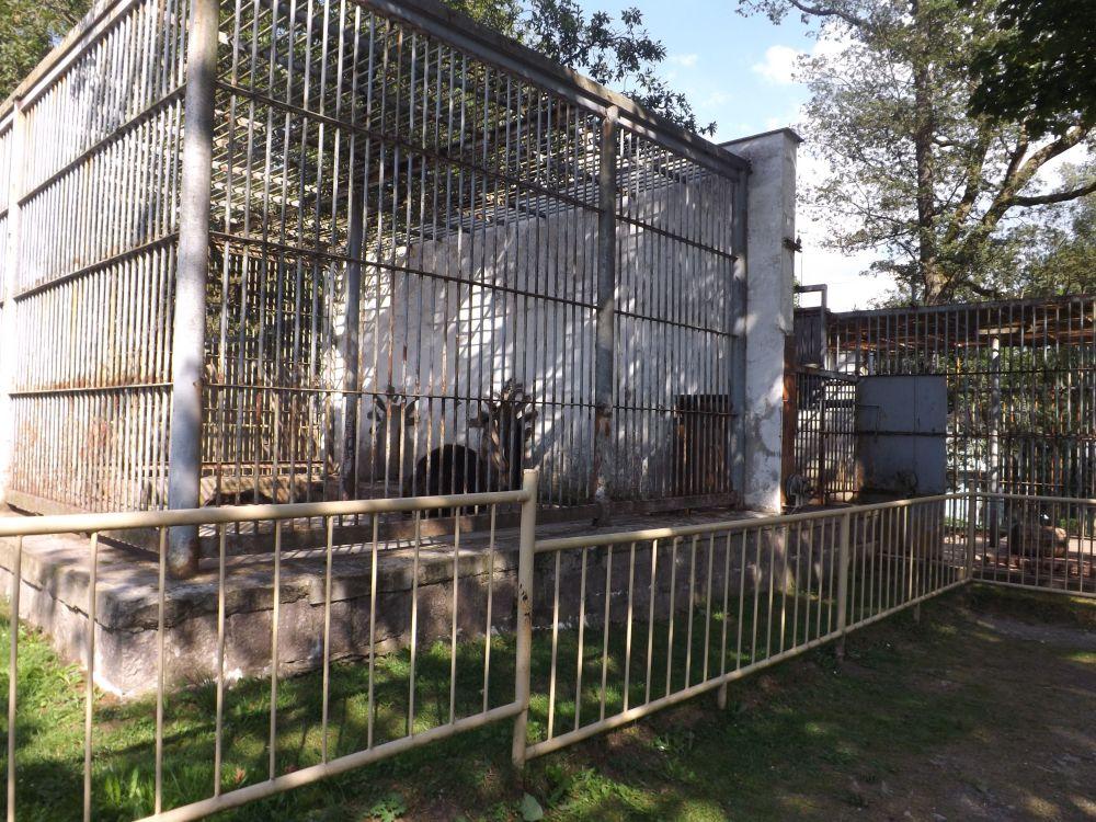 Bärenanlage von vorne (Tierpark Klingenthal)