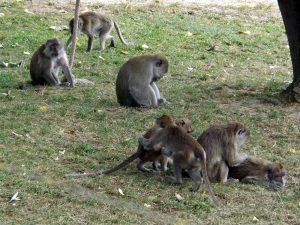 Javanerhof (Tier-Natur-Erlebnispark Mundenhof)
