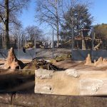 Neue Löwenanlage (Zoo Heidelberg)