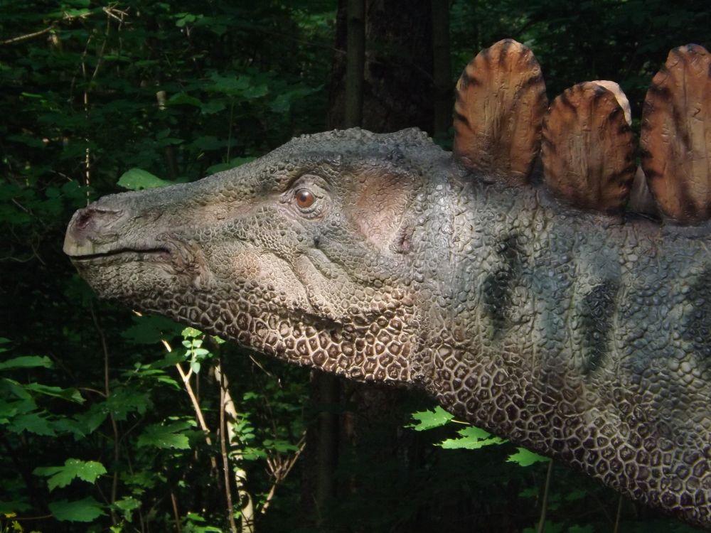 Stegosaurus (Dinopark Vyskov)