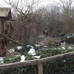 Waschbärenanlage (Wildparadies Tripsdrill)
