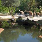 Giraffenanlage (Tierpark Hellabrunn)