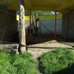 Braunbärenanlage (Tierpark Bad Kösen)