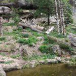 Braunbärenanlage (Zoo Salzburg)