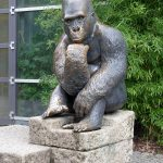 Gorilla (Tierpark Hellabrunn)
