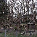 Nasenbärenanlage (Zoo Augsburg)