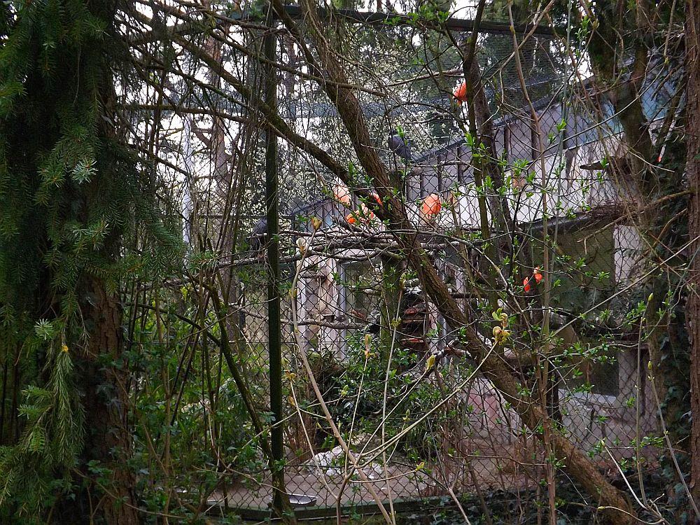 Sichlervoliere (Zoo Augsburg)