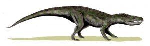 Baurusuchus salgadoensis (© N. Tamura)