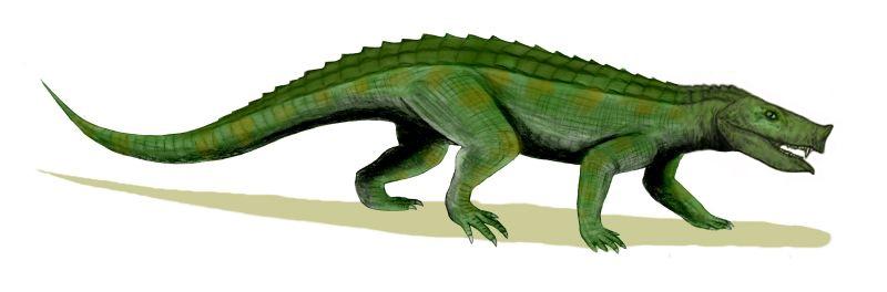 Notosuchus terrestris (© N. Tamura)