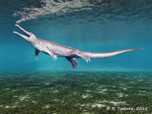 Pholidosaurus meyeri (© N. Tamura)