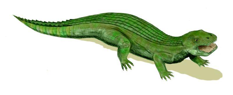 Simosuchus clarkii (© N. Tamura)