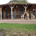 Giraffenanlage (Zoo Magdeburg)
